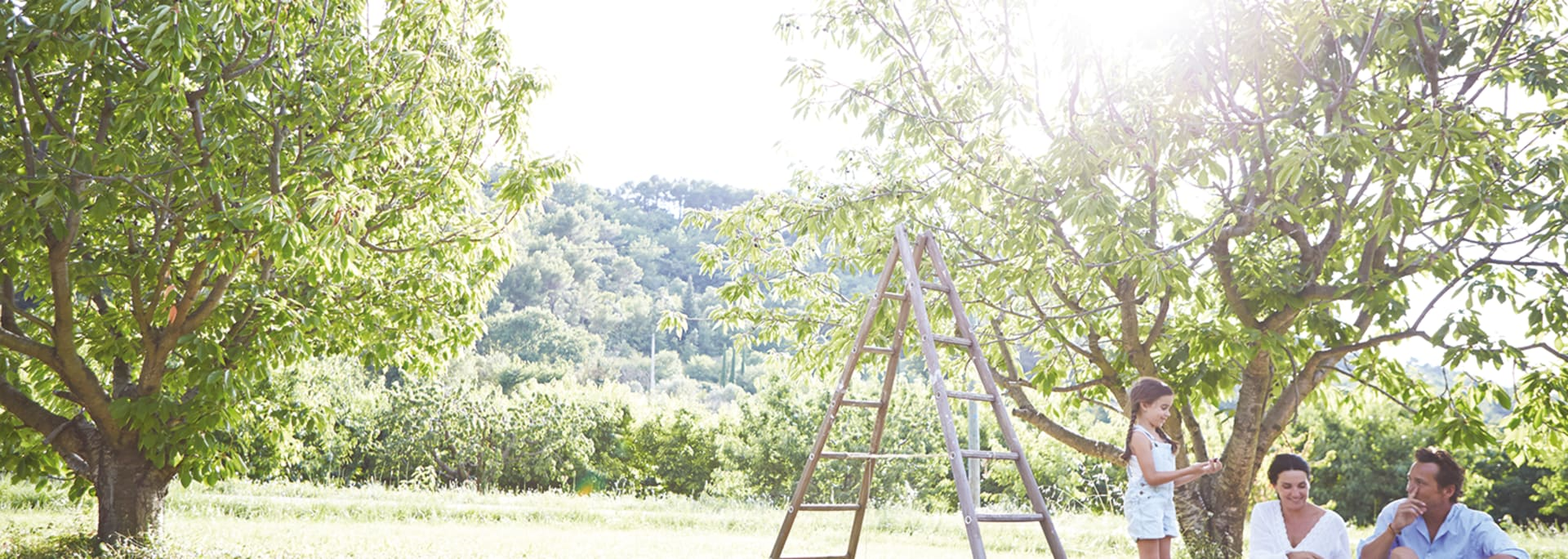 Pique-nique en famille devant des arbres en été