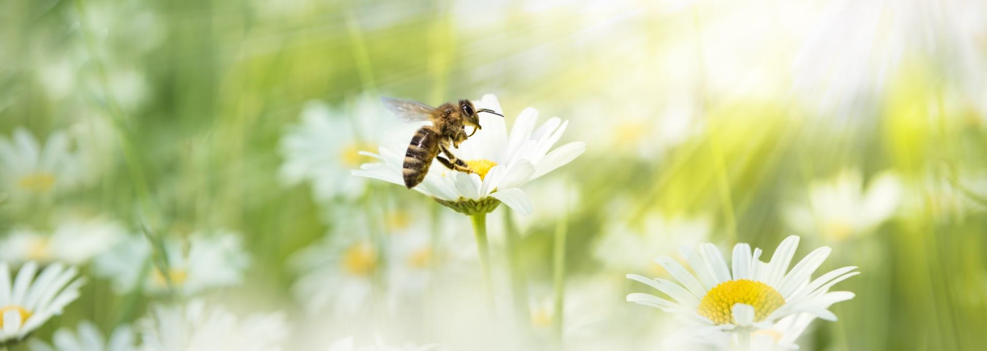 Arı Sağlığı
