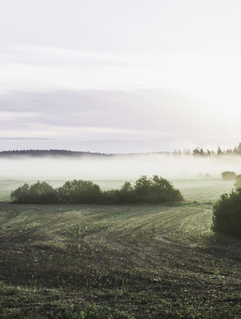 Landskapsbild med fält och några träd