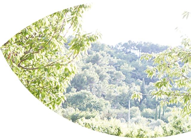 Hero Baum mit Leiter