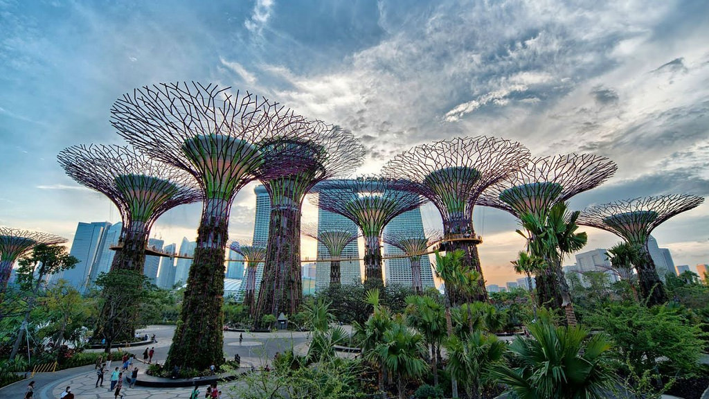 SuperTree Grove | Gardens By The Bay