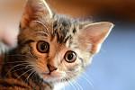 Humane Society Takes Rescue Kittens...