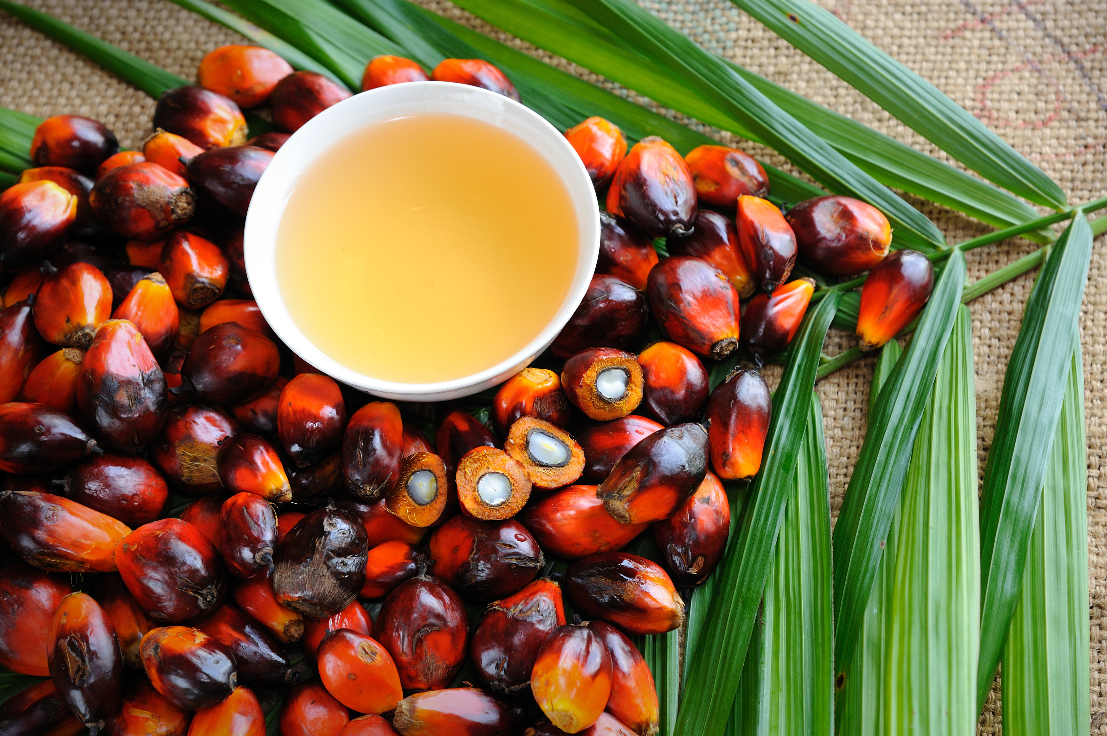 Palmuöljy – huono rasvan lähde ympäristön ja terveyden kannalta