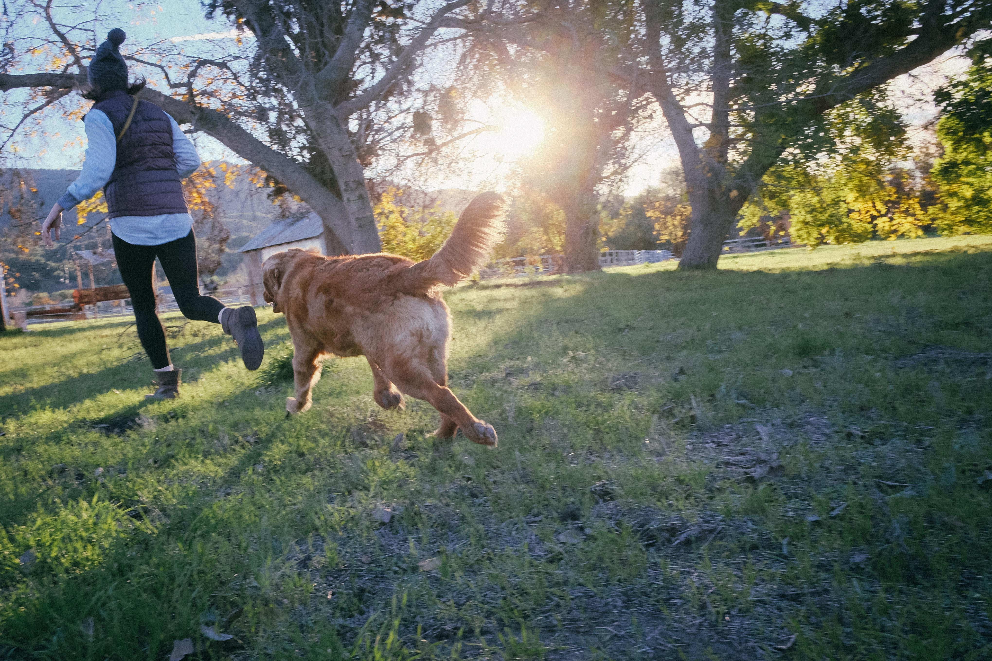Att löpträna med hund
