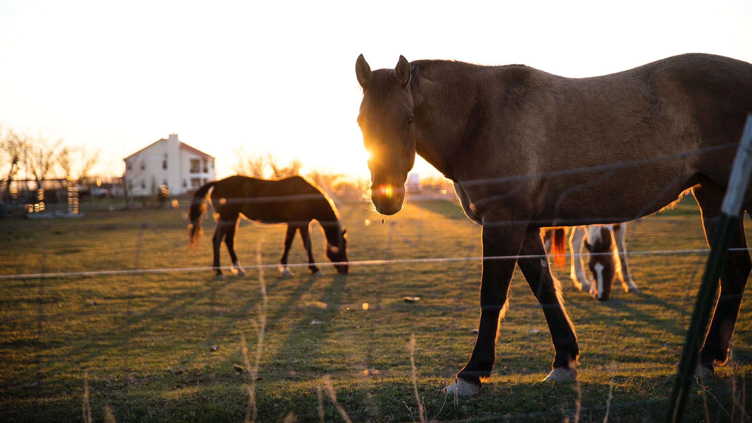 Hjälp, jag är en hästpappa