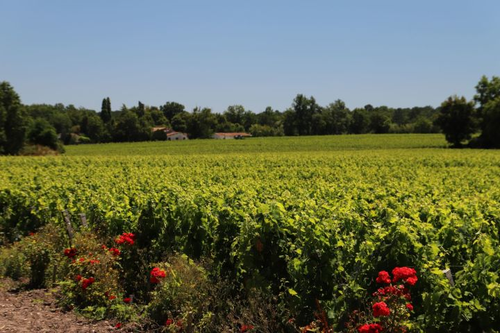Graves Wine Tour Half Day Trip From Bordeaux (private) image