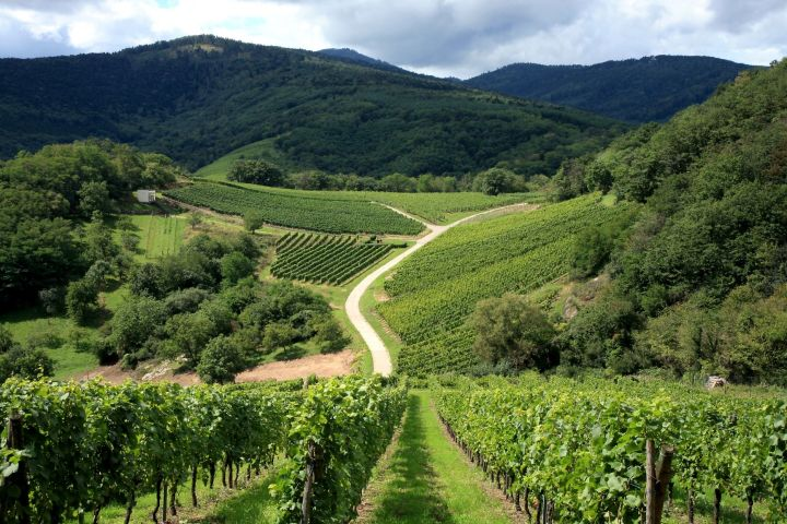 Alsace Villages & Wines Private Half Day Trip from Strasbourg (Private) image