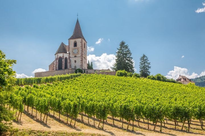 Alsace Wine Tour Half Day Trip From Colmar (Shared) image