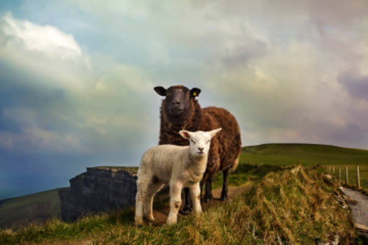 Cliffs of Moher and Burren Private Driving Day Tour image