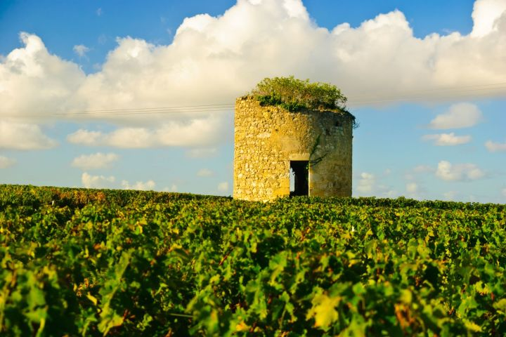 Medoc Wine Tour Half Day Trip From Bordeaux (private) image