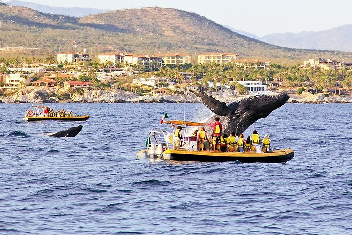 Whale Watching from Los Cabos image
