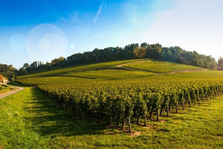 Organic & Biodynamic Wine Tour Full Day Trip From Bordeaux (private) image