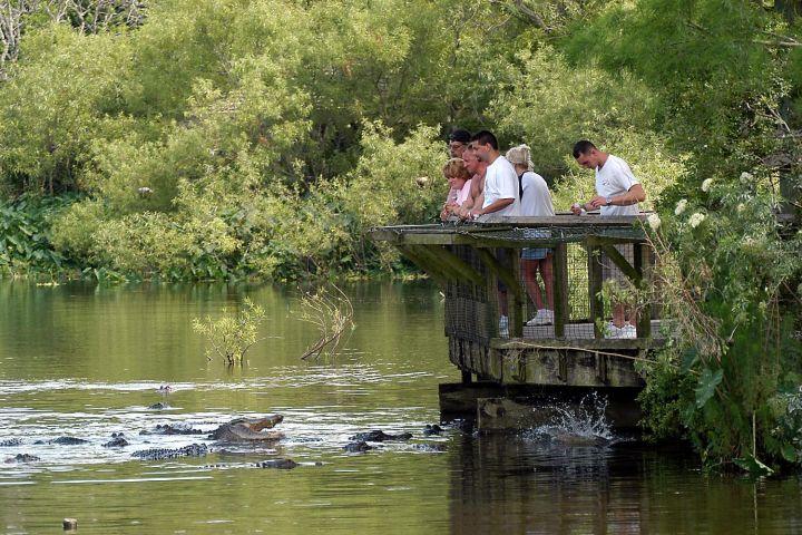 Gatorland with Transportation image