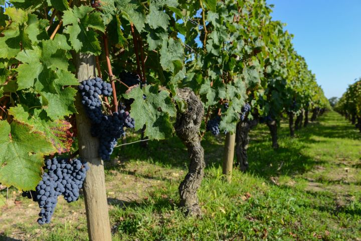 6 Days Bordeaux Wine Tour  & Essential Dordogne (shared) image