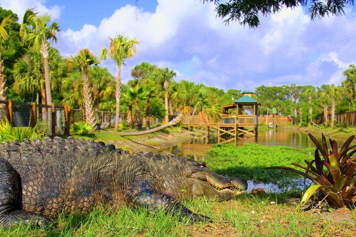 1/2 Day Everglades with Safari Park Admission image