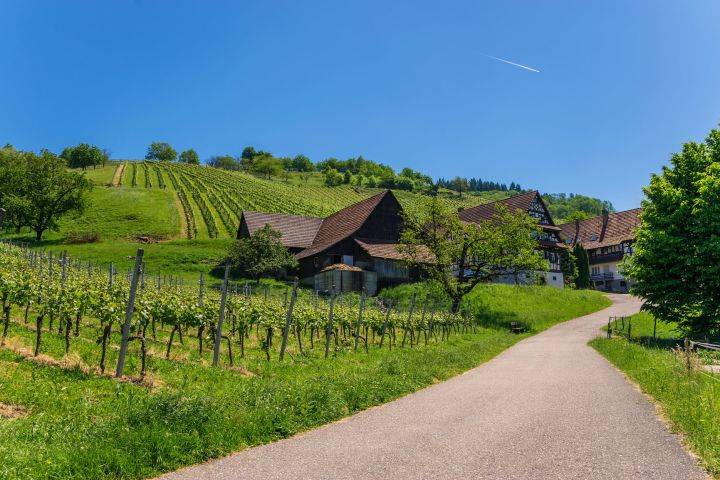The German Wine Route Private Full Day Trip from Strasbourg (Private) image
