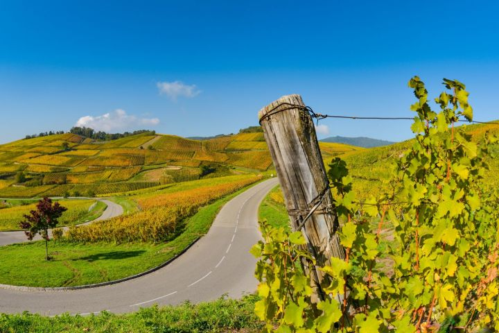Alsace Villages and Wines Private Half Day Trip from Colmar (Private) image