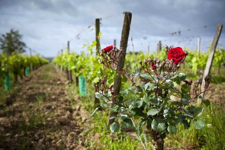 4 Days Bordeaux Wine Tour Travel Package (shared) image