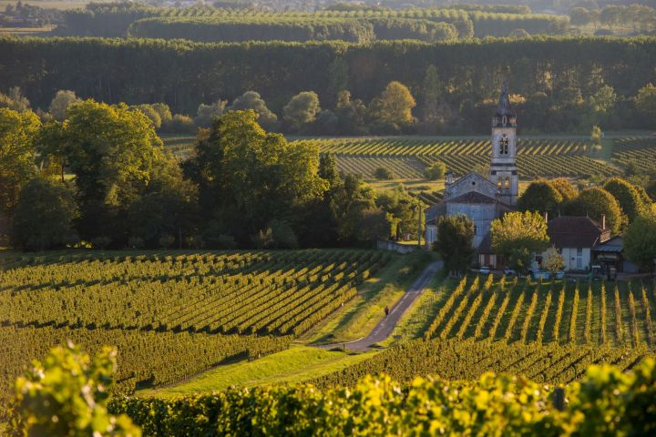 Graves & Sauternes Wine Tour Full Day Trip From Bordeaux (private) image