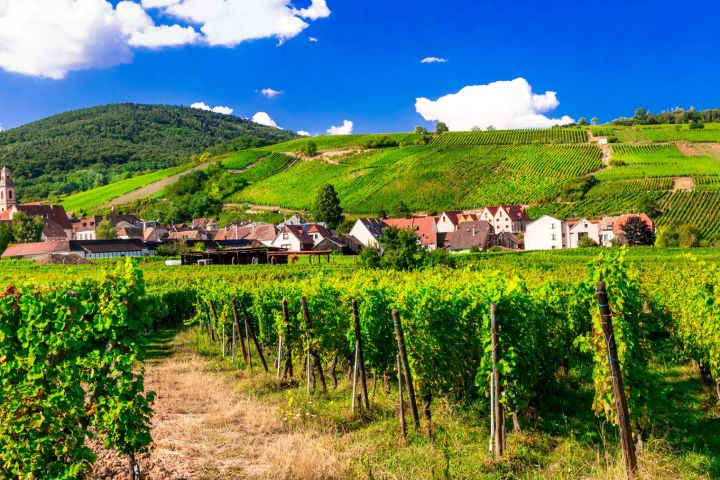Alsace Wine Tour Full Day Trip From Strasbourg (shared) image