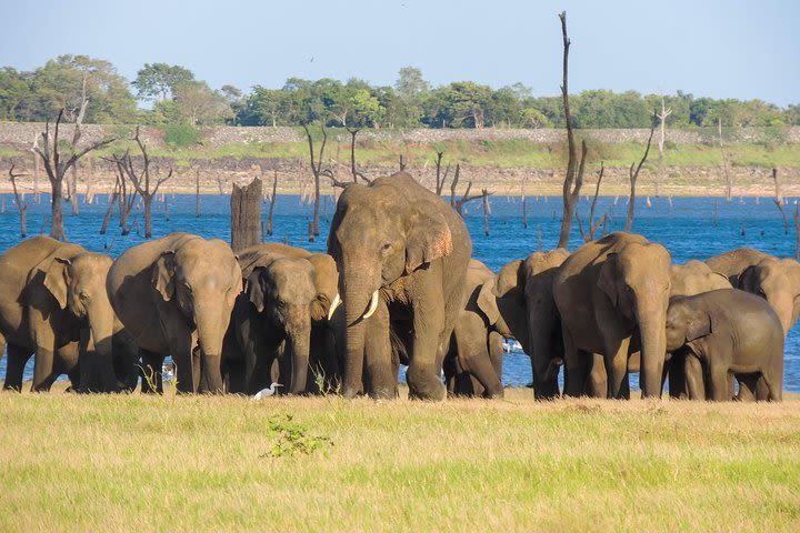 Kaudulla National Park Private Safari image