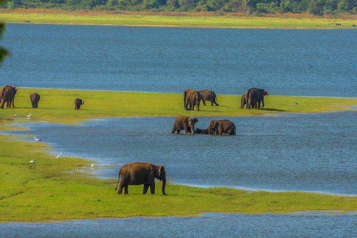 Minneriya National Park Private Safari image