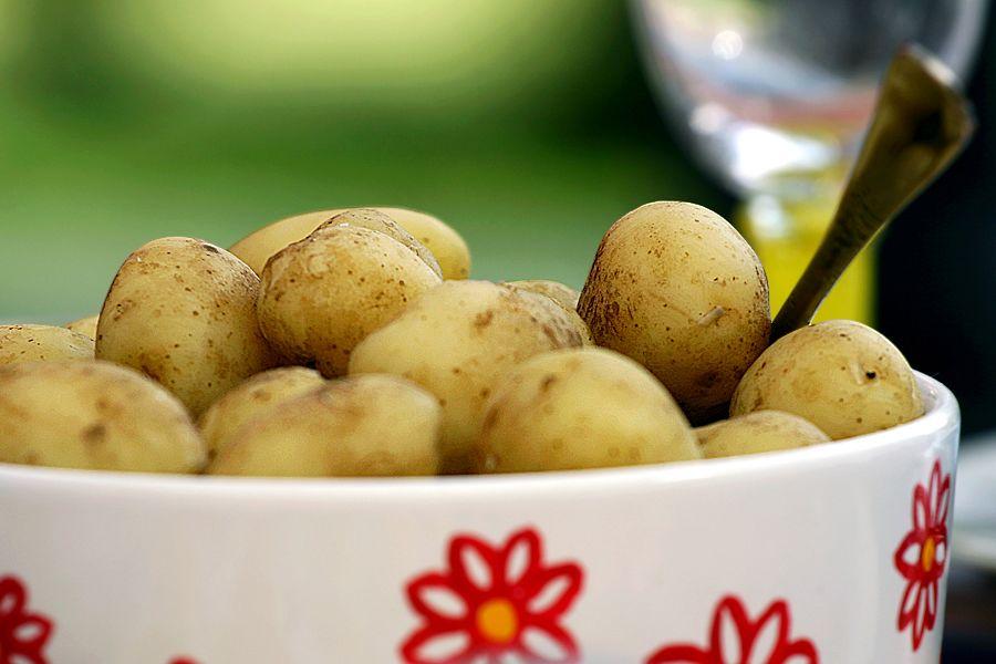Kokt potatis - grundrecept