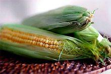 allergisk mot majs