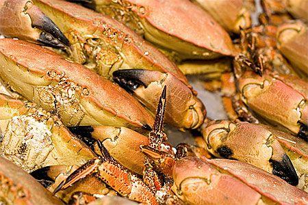 allergisk mot skaldjur