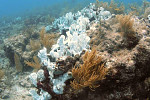 Warming, acidic oceans may nearly...
