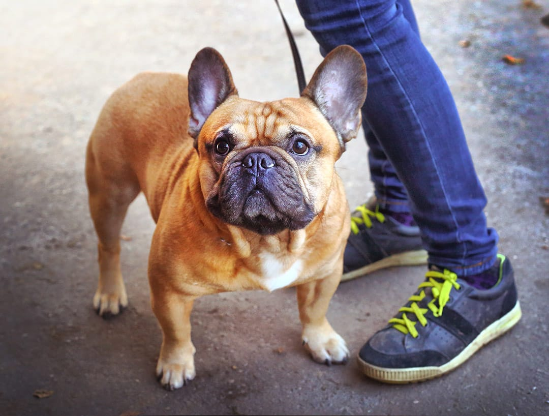 Get A Dog Sitting Job With DogBuddy In Barcelona   AppJobs