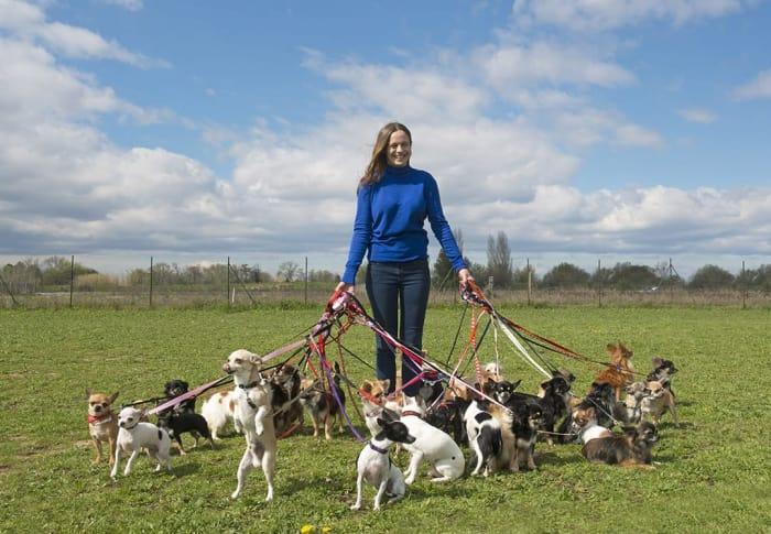 Dog Walking Jobs In Manchester At Tailster Appjobs