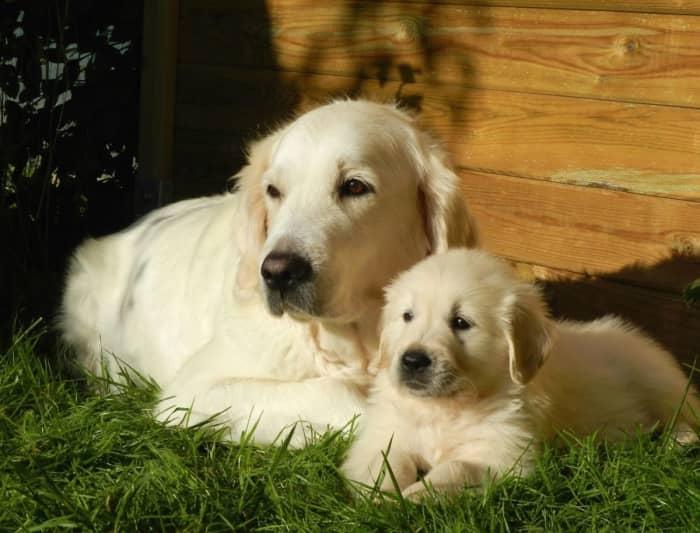 Become a pet sitter in Phoenix, AZ with PetSitter com - AppJobs