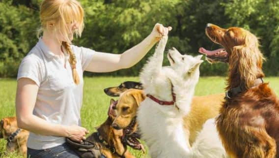 Become a pet sitter in New York City with PetSitter com