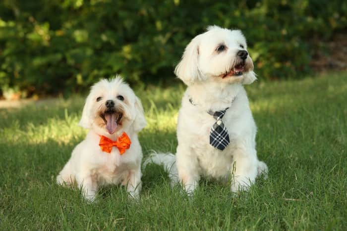 Dog walking & sitting jobs in Phoenix, AZ - Rover - AppJobs