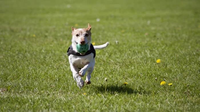 Dog walking & sitting jobs in Las Vegas, NV- Rover - AppJobs