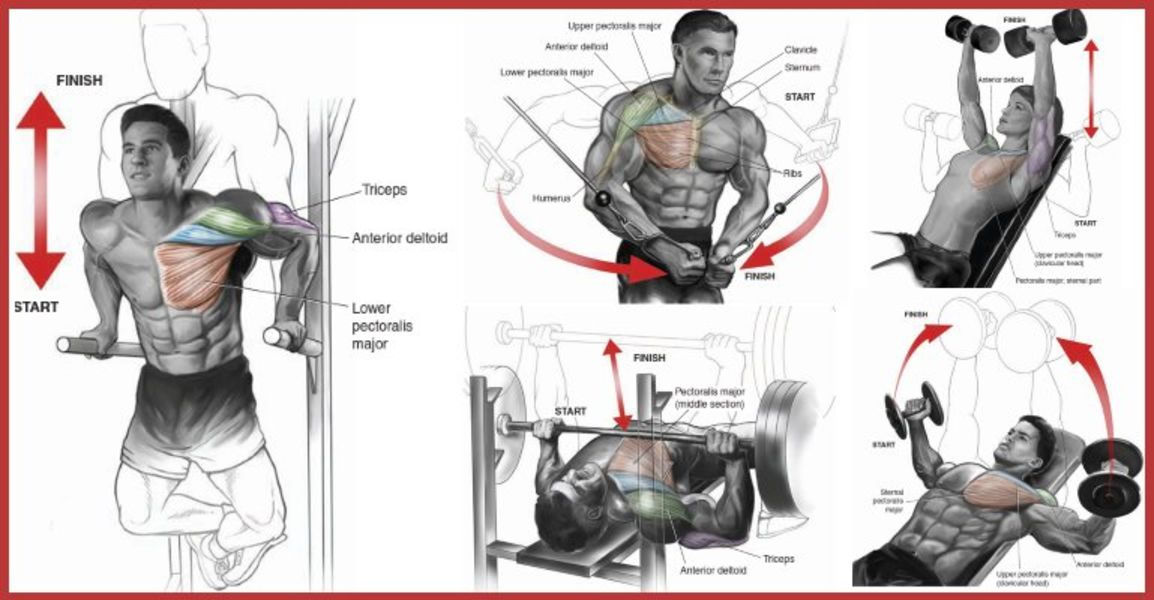 7 Most Effective Exercises and Techniques To Build The Upper Chest, Preferred By Top Bodybuilders