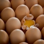 eating real eggs