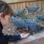 How to Raise Your Own Chickens
