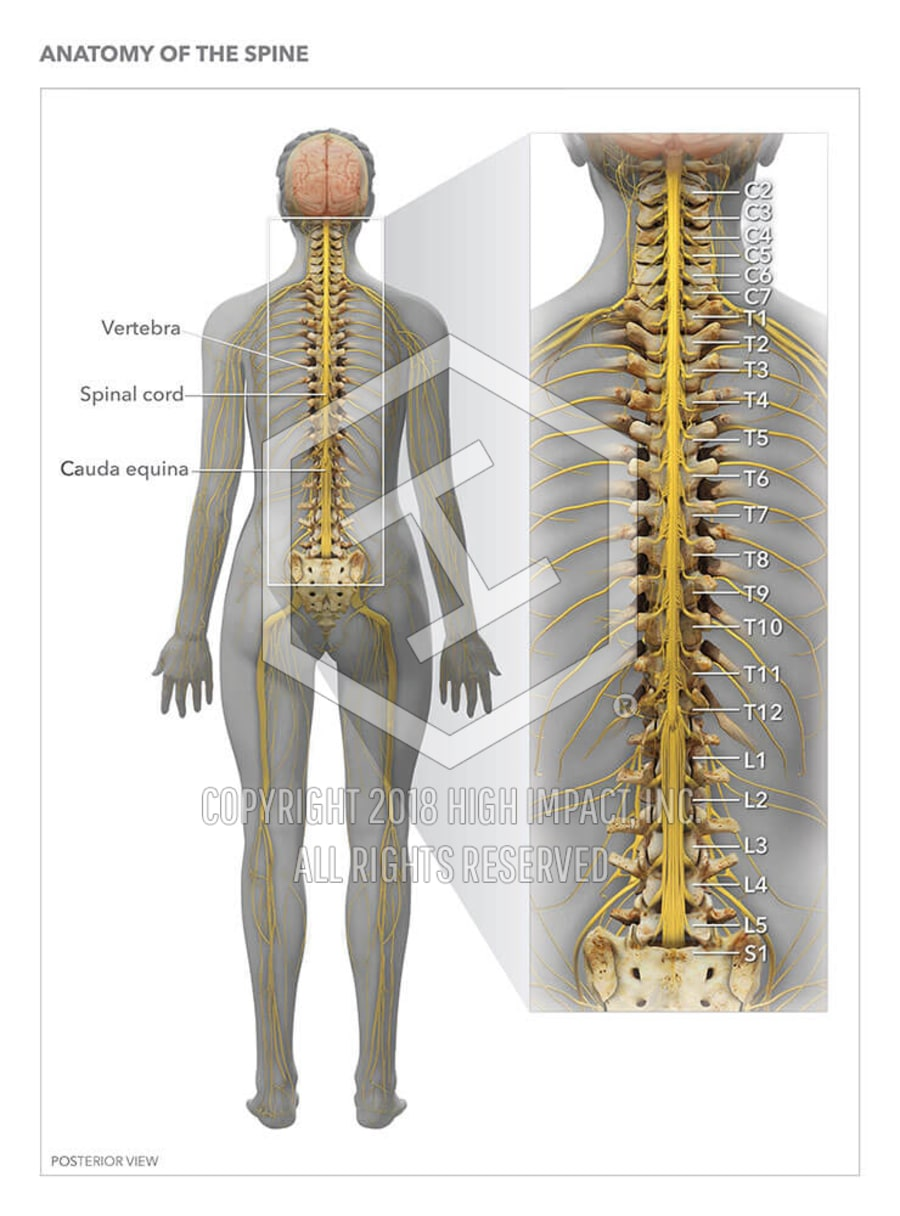 Anatomy Of The Spine High Impact Visual Litigation Strategies