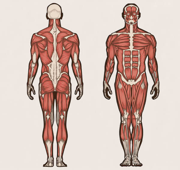 Anatomy Resource Guide for Nursing Students | 2018 NurseJournal.org