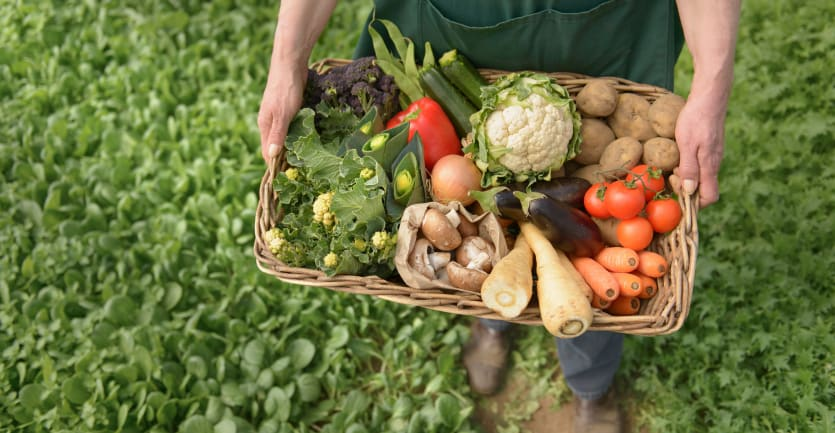 A person in a work apron stands in verdant farmland holding a wicker basket full of organic vegetables.