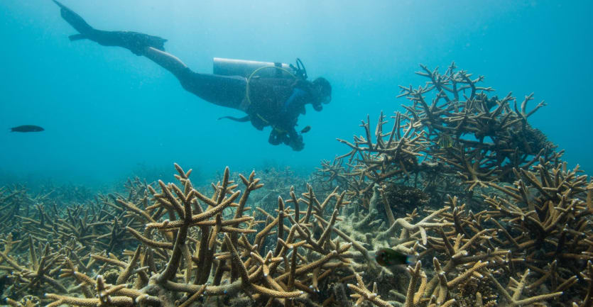 A research diver swims by a recovering reef structure in the ocean.