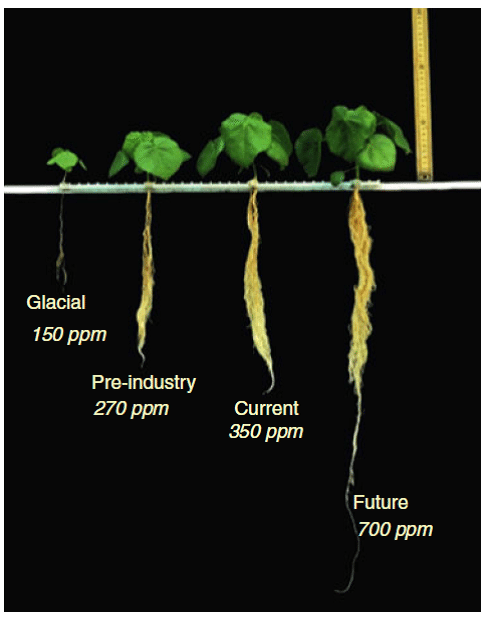 Response of Seedlings to Various CO2 Levels