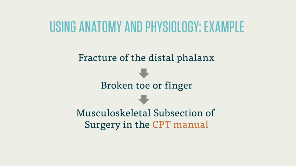 Cpc Exam Anatomy And Physiology