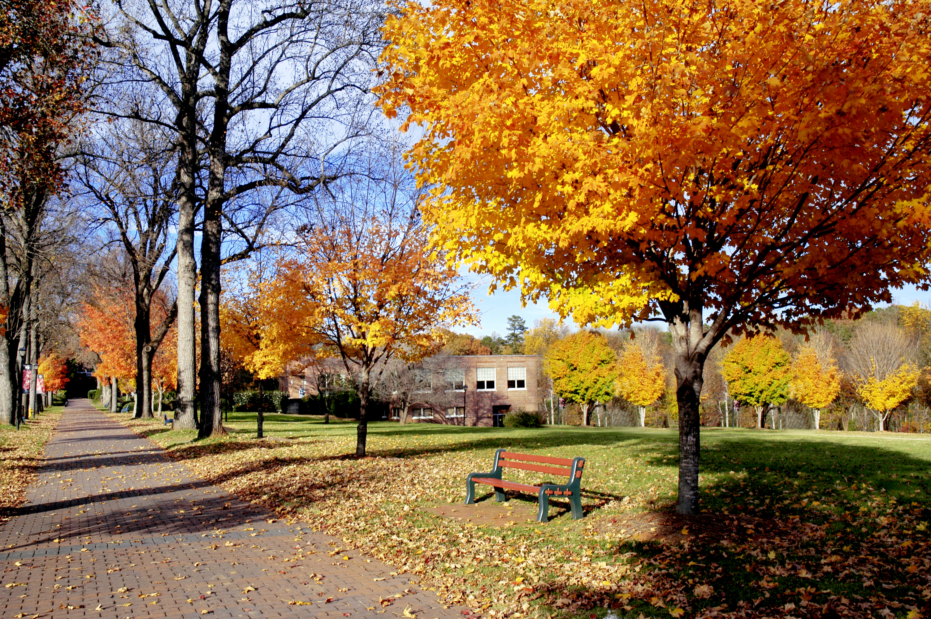 A landscape photograph of an empty college campus in the autumn; fallen leaves litter a brick path next to a forlorn bench.