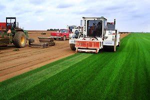 turfgrass-science