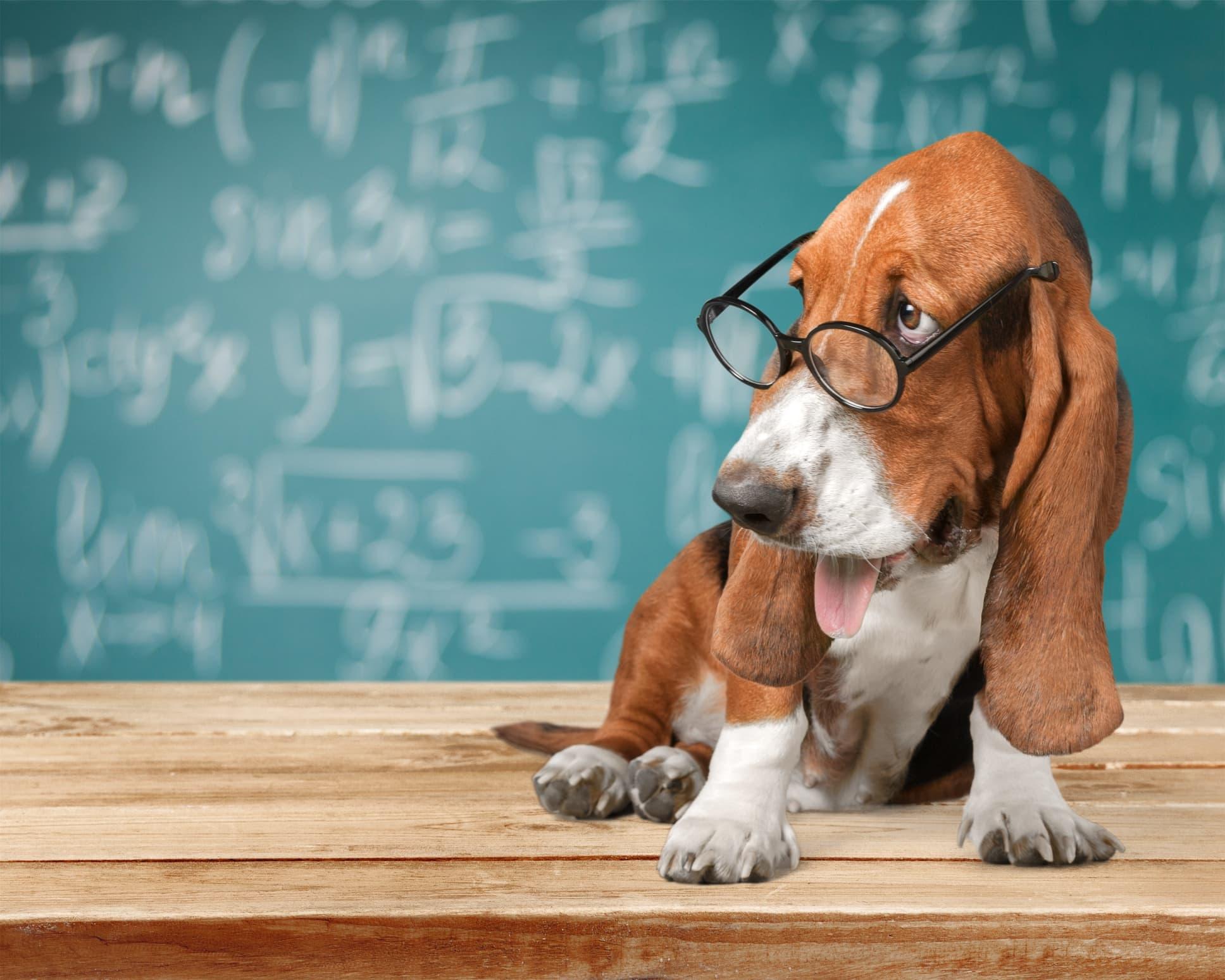 Best Veterinary Schools and Programs 2021
