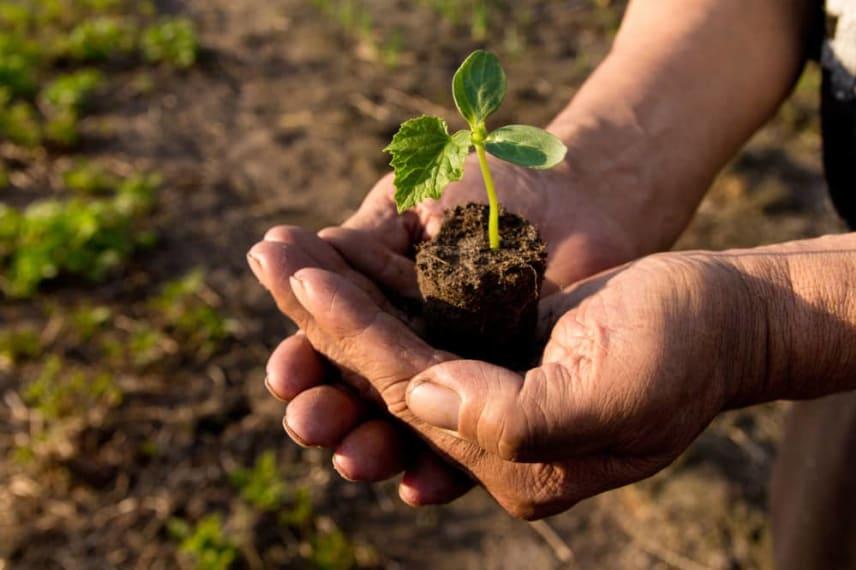Online Master's Programs in Environmental Science