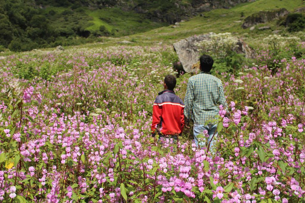 Full bloom Valley